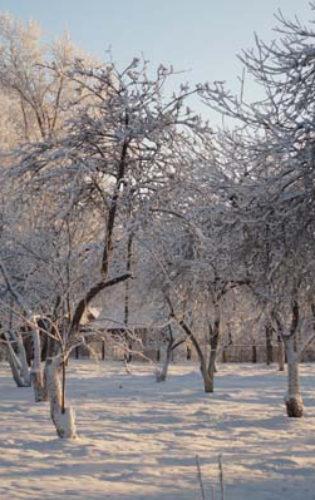 Пушкиногорский Дом Ветеранов (13)